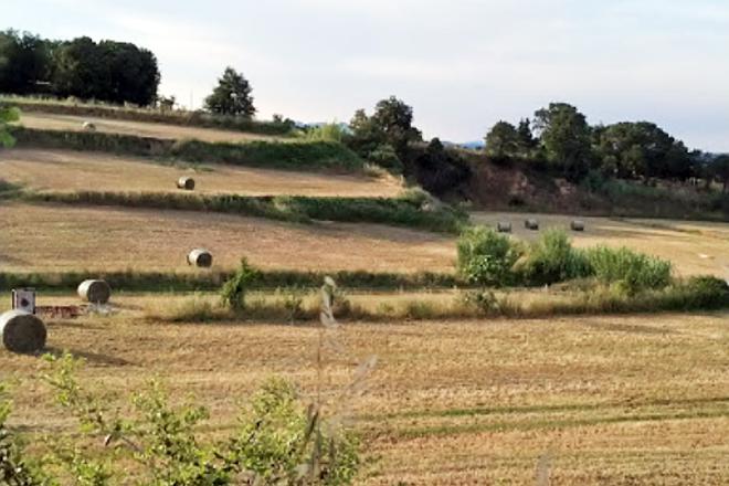 En la pradera permantente siembran una combinación resistente a la sequía