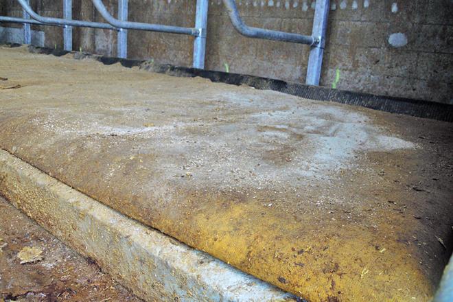 Cama de colchoneta na zona de vacas secas