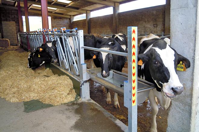 A nova zona para as vacas secas, reformada no espazo que antes ocupaban as xovencas
