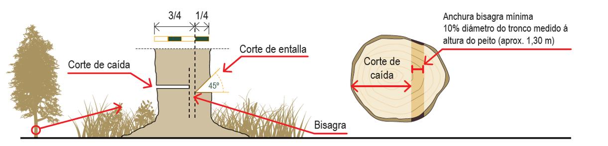 ISSGA CORTA ARVORES SENTADAS 2