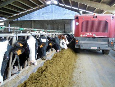 """Así lles está afectando a suba do penso ás granxas de vacún de leite: """"O peor está por chegar"""""""