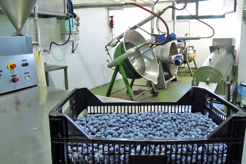 Zona de elaboración, onde empregan froita madura de tempada. O 50% da materia prima é propia e o resto mércana a outros produtores de Galicia e Portugal