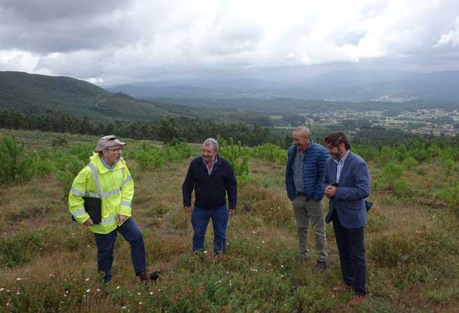 Árbores por carbono nos montes galegos