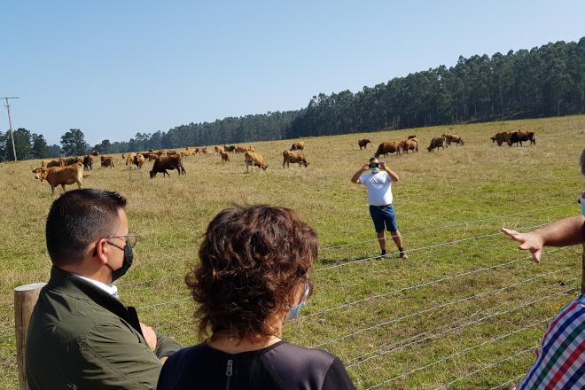 """As """"Vaquiñas de Pinzás"""", un proxecto pioneiro e exemplar de xeración de riqueza e prevención dos lumes"""