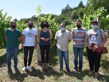 Ofrécese formación para persoas que se queiran incorporar á viticultura nas Terras do Navia