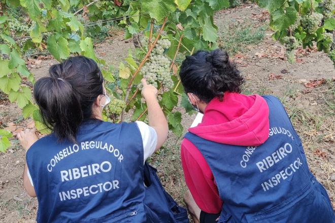 O Consello Regulador da DO. Ribeiro prepara un operativo de 25 persoas para a vendima 2021
