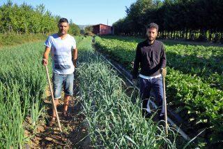 Terra de Baronceli, sacar partido á produción ecolóxica facendo conservas