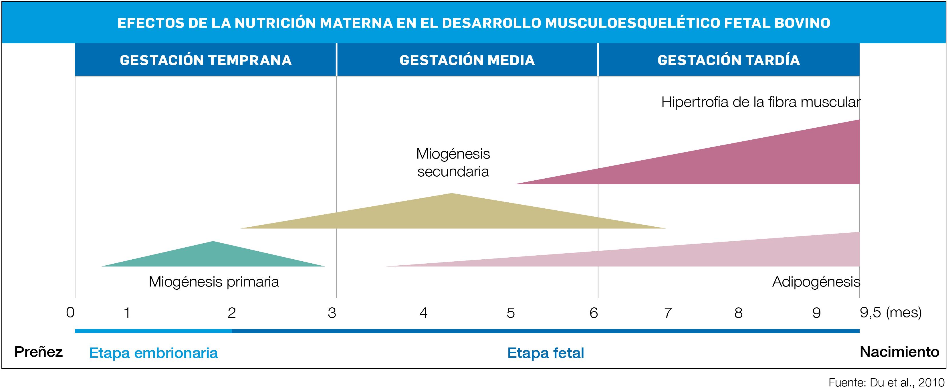 gráfico 1 CG EFECTOS DE LA NUTRICIÓN MATERNA EN EL DESARROLLO DE HEUS