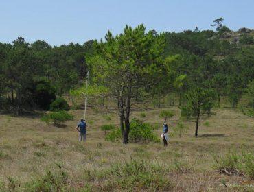Unha investigación estuda a resistencia á seca de piñeiros galegos
