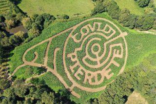 Crean a mensaxe !Covid piérdete! nunha leira de millo dunha granxa ecolóxica galega