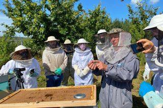 """""""É un erro introducir outras razas de abellas porque cando se cruza coa local aparece máis agresividade"""""""