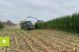 A cooperativa Aira arrinca a campaña de ensilado do millo deste ano na zona de Chantada