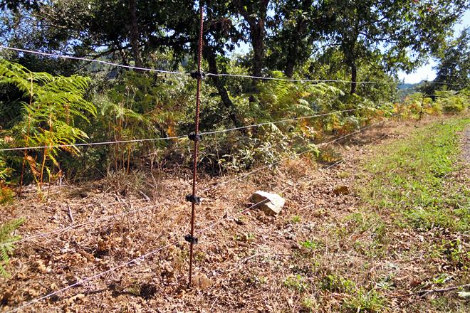 Un dos peches electrificados con 4 fíos cos que teñen pechadas 10 hectáreas de monte en Vilela