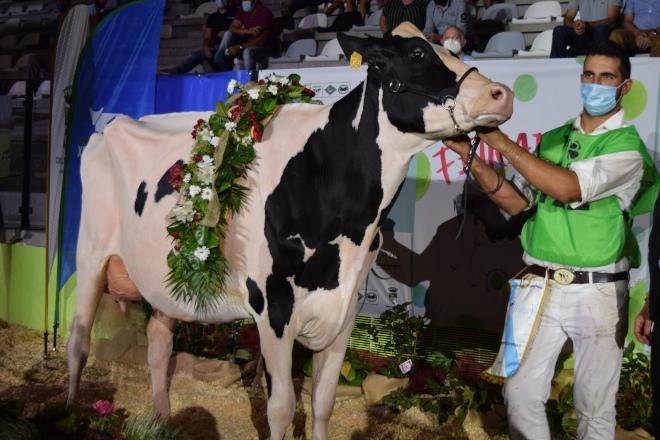"""""""É a vaca Gran Campiona de Galicia porque é un animal moi completo e moderno"""""""