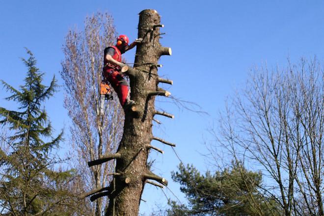 Curso en Ribadeo sobre poda de árbores en altura