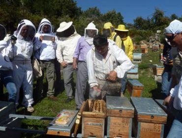 Tratamentos orgánicos combinados con manexo biotécnico, novas alternativas contra a varroa
