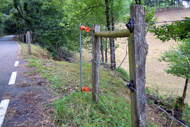Hai dous anos Amaro levou un premio da empresa galega de pastores eléctricos Ion pola calidade dos seus peches