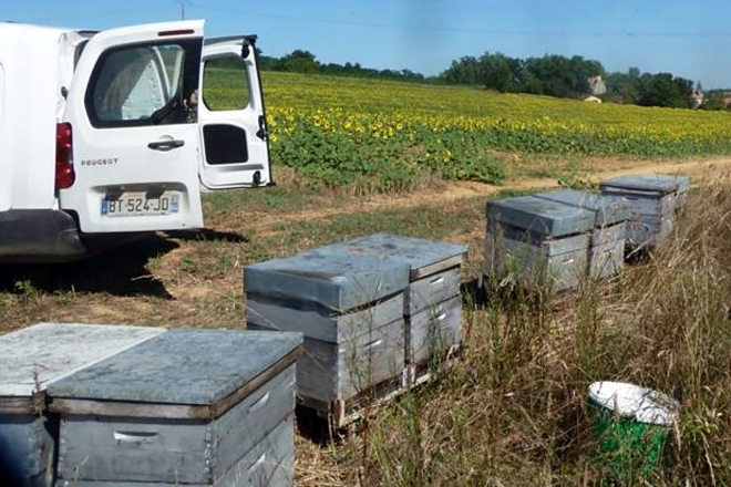 Servicio de polinización de cultivos agrícolas con abejas prestado por Gilles Fert