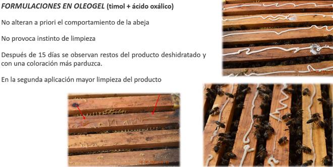 resultados oleogel timol+acido oxalico