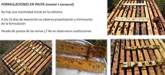 resultados pasta mentol+carvacrol