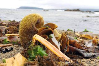 O Campus Terra desenvolve insumos agrícolas con algas mariñas para cultivos en ecolóxico