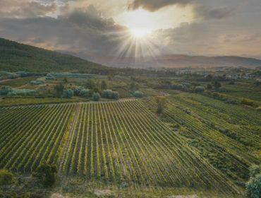 A DO Monterrei colleita máis de 6,2 millóns de quilos de uva na campaña 2021