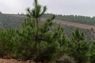 Xornadas divulgativas sobre xestión forestal sostible e certificación do monte