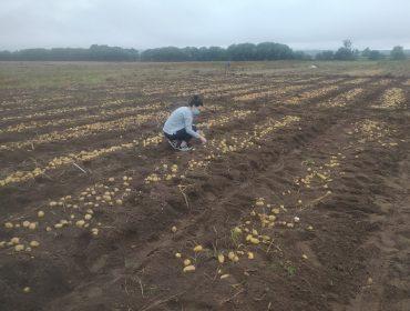 O Centro de Desenvolvemento Agrogandeiro do Inorde e Neiker colaboran na investigación de futuras variedades de pataca