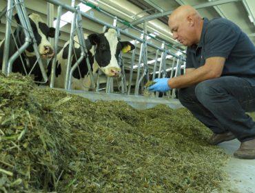 """""""Un bo silo de herba é a forma máis económica e razoable de subir a graxa no leite"""""""