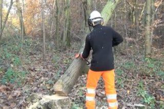Recomendacións preventivas de actuación ante árbores apoiadas enganchadas