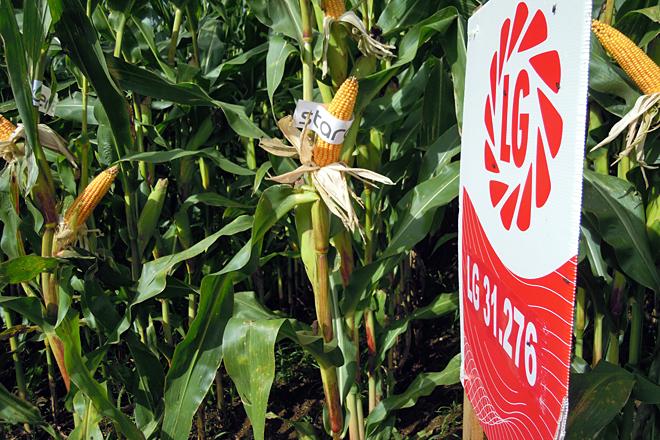campo de ensaio millo Aira Delagro Pol3