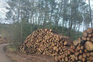 Taller sobre tramitación electrónica das cortas de madeira