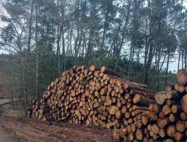 Timbertrack, un sistema para etiquetar a madeira desde a súa corta no monte