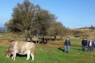 A Xunta anuncia que en 2022 investirá un 58% máis para crear pasteiros en montes veciñais